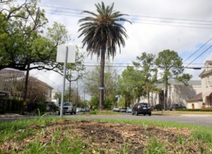 The remaining trees along Jefferson Avenue between South Claiborne and Danneel will be removed starting this week. (UptownMessenger.com file photo from April 2013)