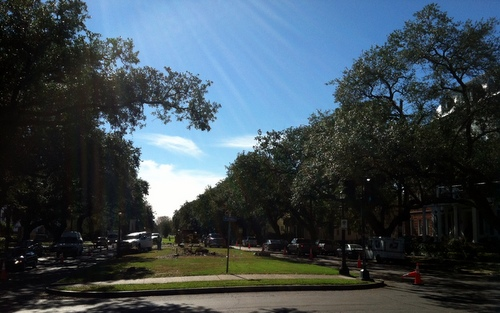 Napoleon Avenue neutral ground, minus crepe myrtles. (photo by Jean-Paul Villere)