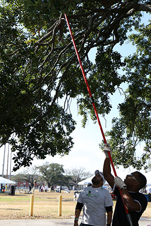 Joel Lee cuts down a low-hanging branch of an oak tree. (photo by Zach Brien for UptownMessenger.com)
