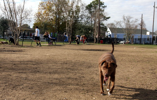 A dog runs the length of Wisner Park. (UptownMessenger.com)