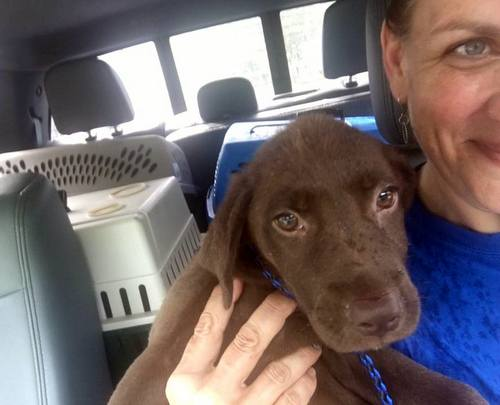 Michelle Ingram of Zeus' Place smiles with a furry passenger rescued from shelters in the flood zone. (via Facebook)